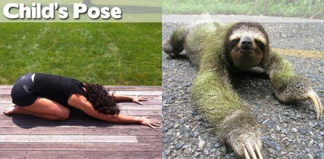 yoga-and-animals- (6)