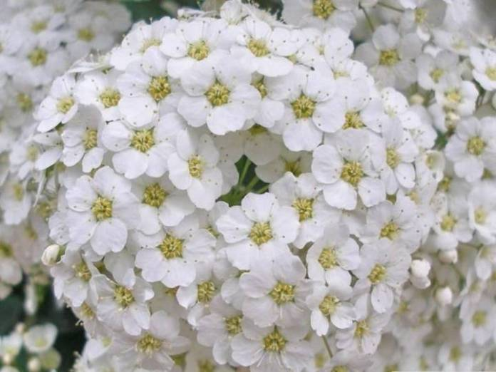 beauty-of-white-color- (2)