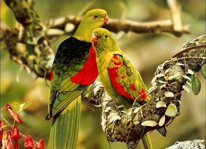 lovely-birds-couple-30-photos- (4)