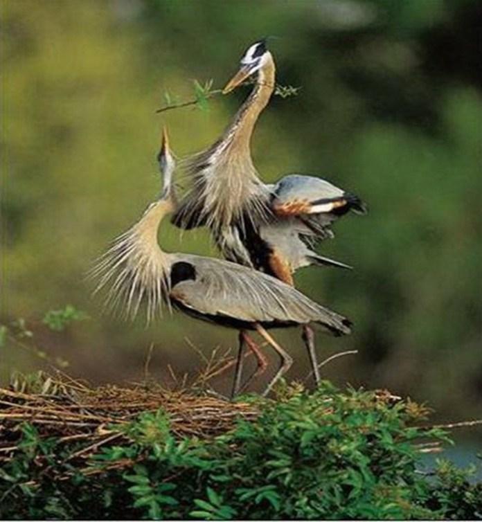 lovely-birds-couple-30-photos- (15)
