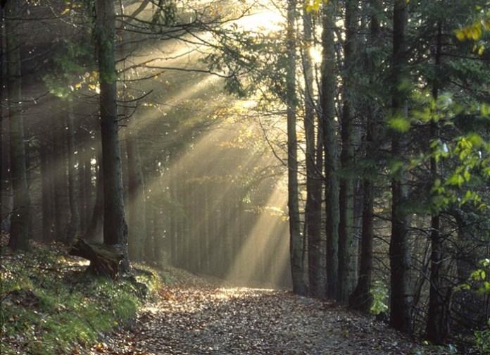awesome-sunshine-photos- (6)