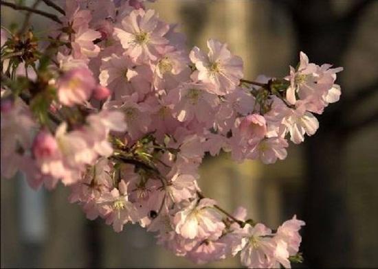 blooming-trees- (6)