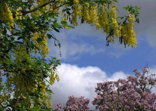 blooming-trees- (21)