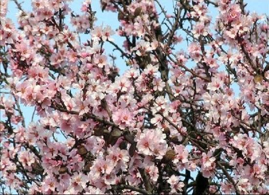 blooming-trees- (22)