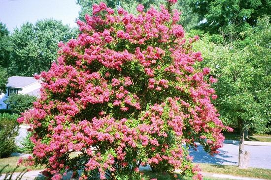 blooming-trees- (23)