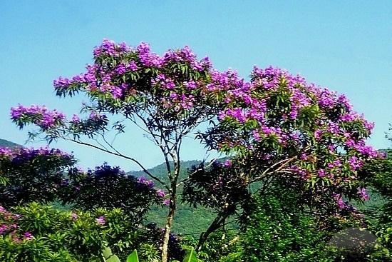 blooming-trees- (25)