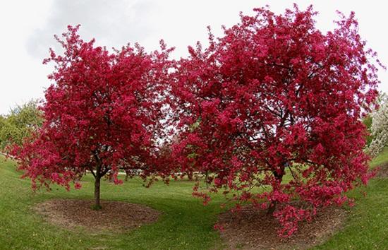 blooming-trees- (26)