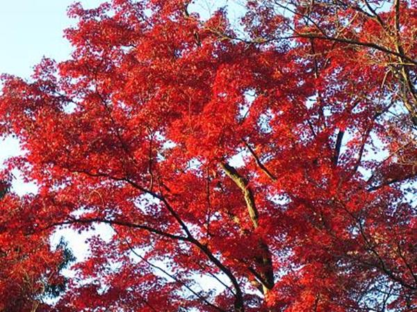 autumn-in-japan- (12)