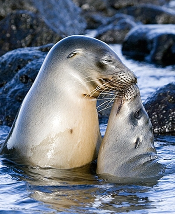 baby-animals-and-mothers- (5)