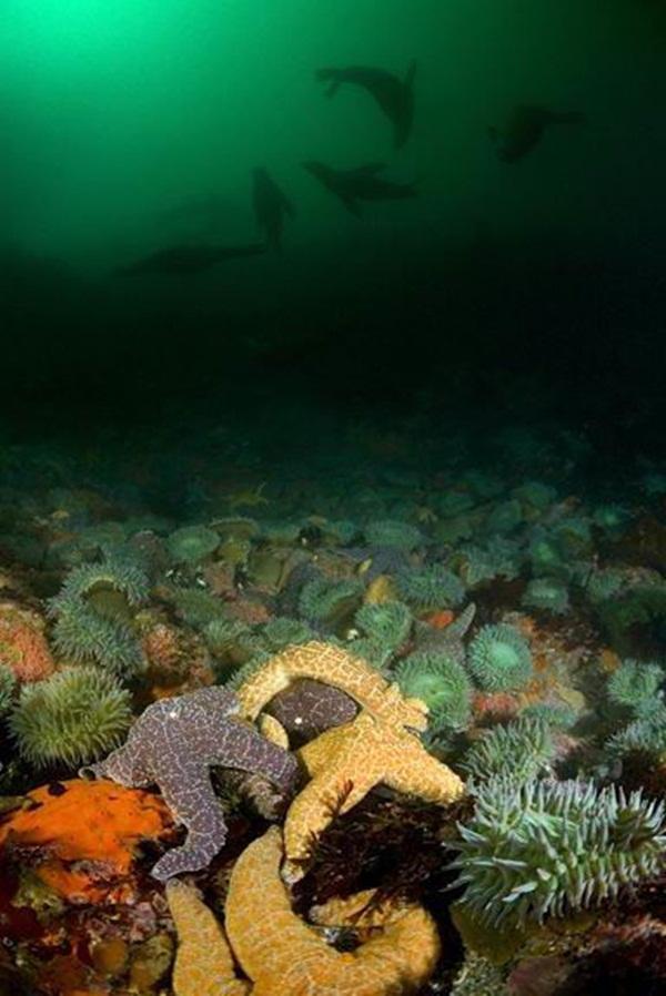 colorful-marine-life-25-photos- (2)