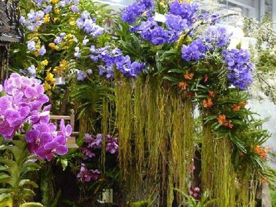 taipei-flora-exposition- (8)