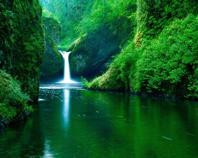 Something also beautiful green nature join