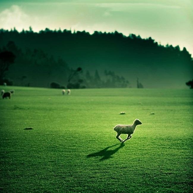 beautiful-green-nature- (27)