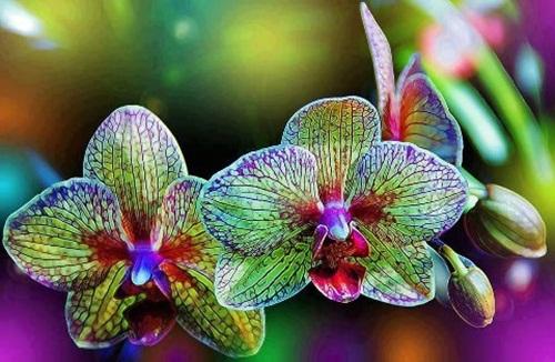beautiful-flower-photos- (18)