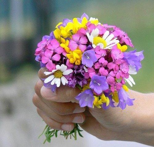 beautiful-flower-photos- (22)