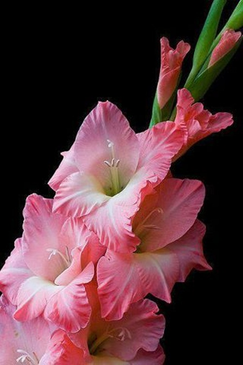beautiful-flower-photos- (23)