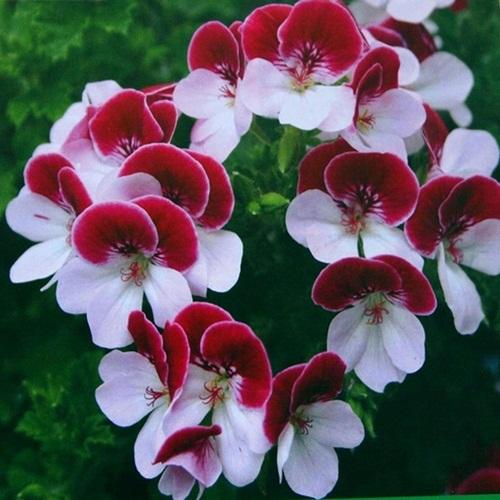beautiful-flower-photos- (24)