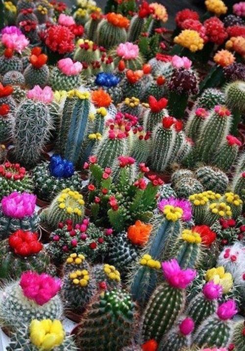 beautiful-flower-photos- (30)