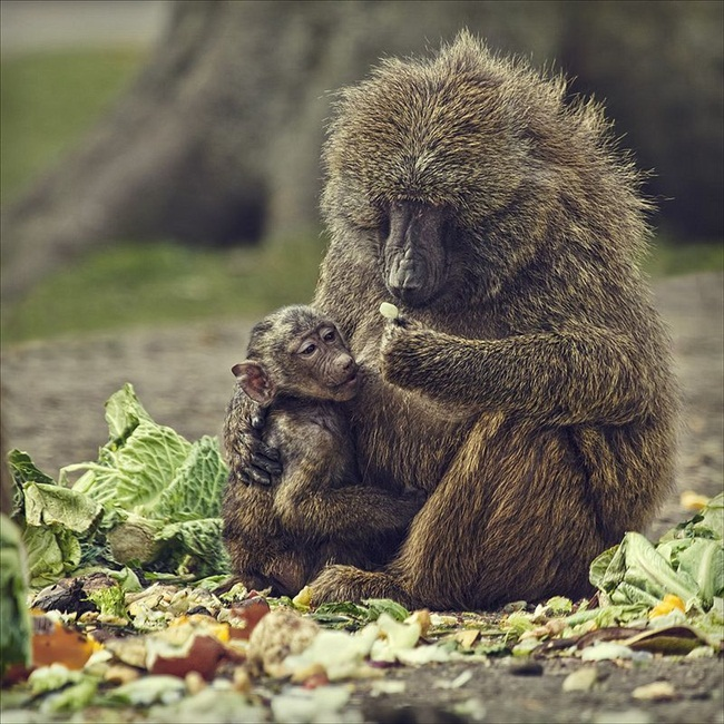 animals-planet-photos- (8)
