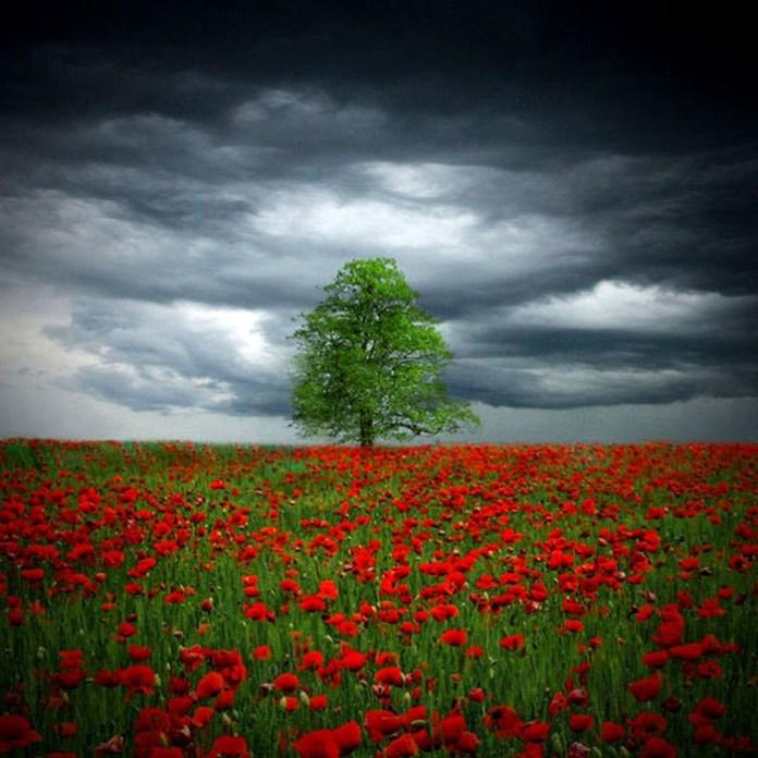 beautiful-landscape-photos- (10)