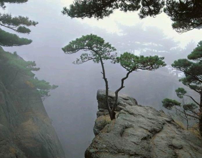 beautiful-nature-scenery-02