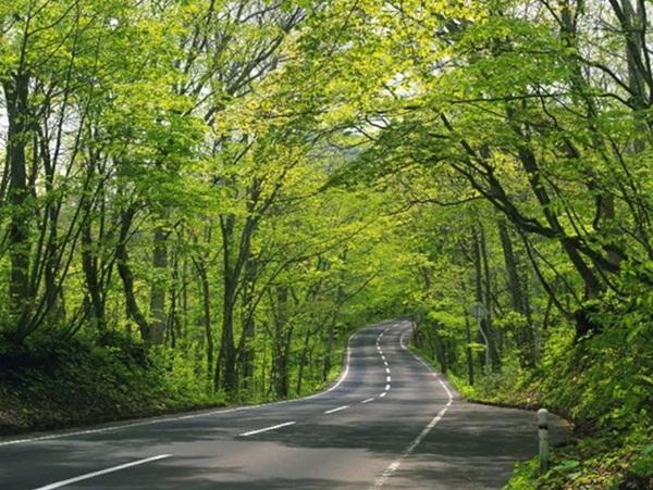 beautiful-roads-of-the-world- (10)