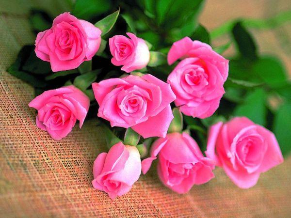beautiful-roses-wallpapers-20-photos- (1)