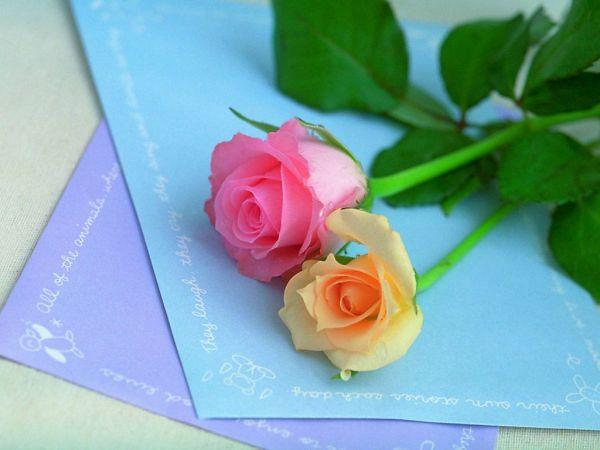 beautiful-roses-wallpapers-20-photos- (14)