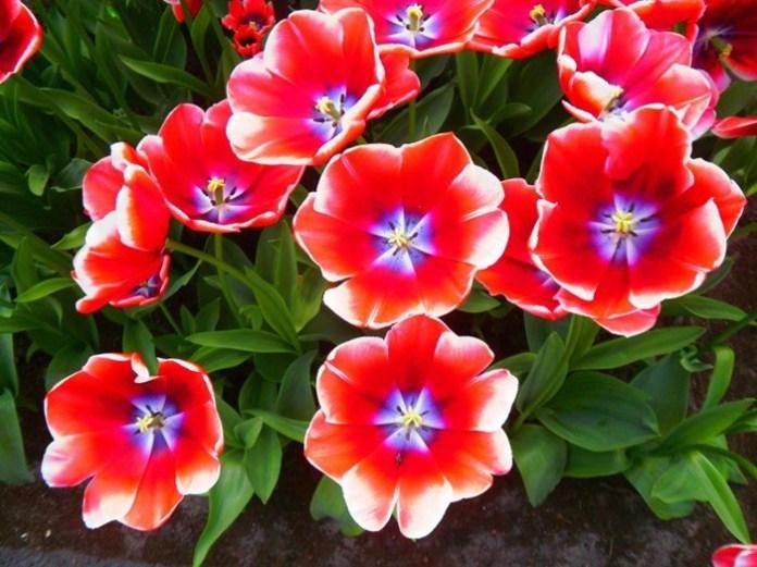 bloom-fresh-flowers- (2)
