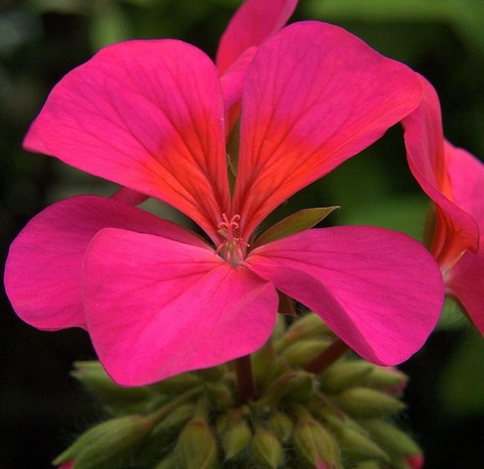 bloom-fresh-flowers- (11)