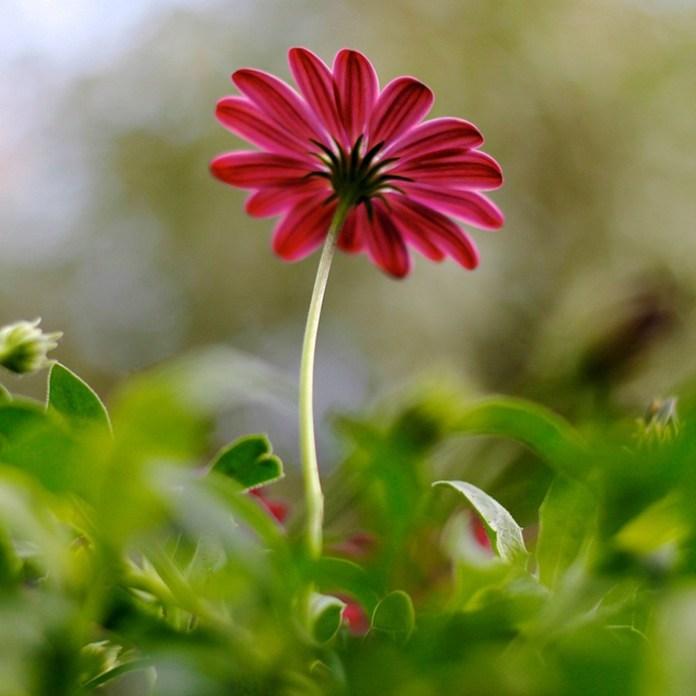 bloom-fresh-flowers- (15)