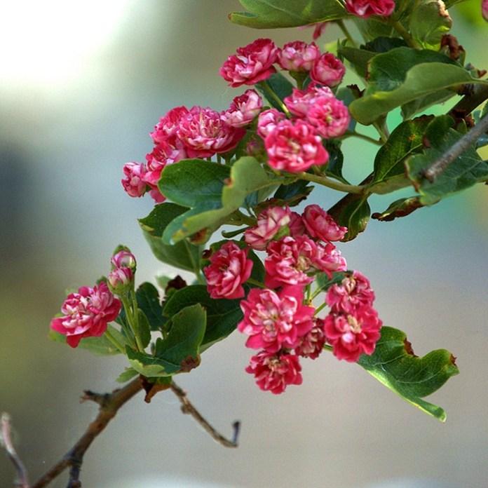 bloom-fresh-flowers- (19)