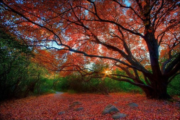 beautiful-autumn-wallpapers- (3)