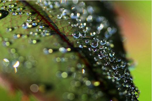 dew-drops- (18)
