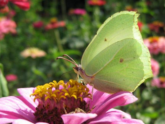flowers-and-butterfly- (13)