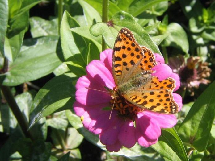 flowers-and-butterfly- (20)