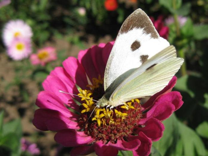 flowers-and-butterfly- (8)