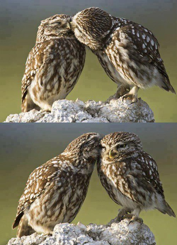 love-birds-kissing- (35)