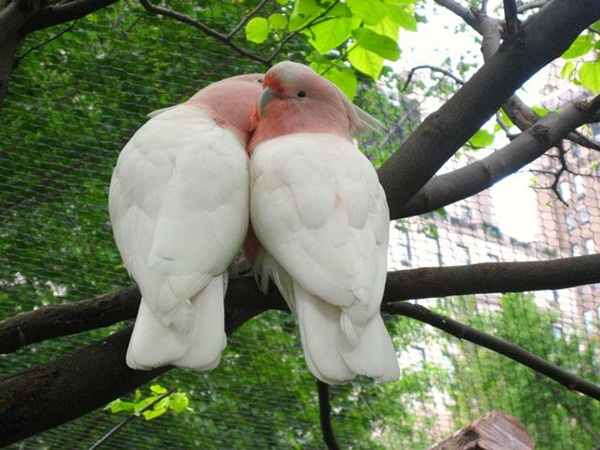love-birds-kissing- (38)