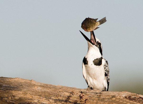 wildlife-of-africa- (6)