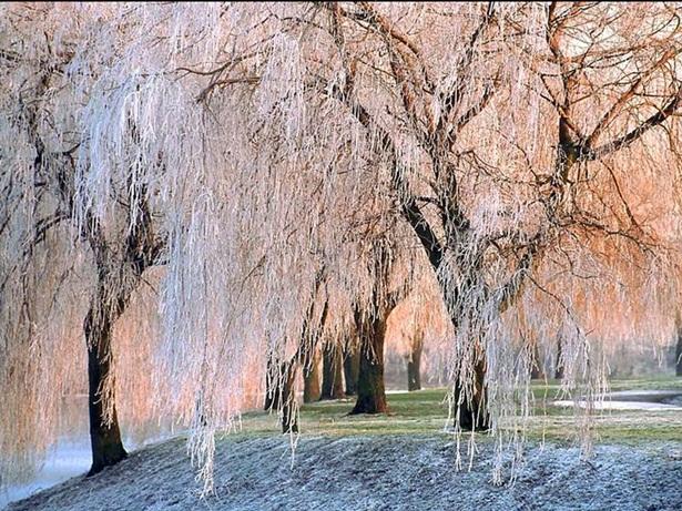 25-winter-photos- (20)
