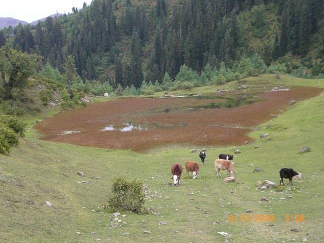 siri-paye-and-shogran-valley-pakistan- (8)
