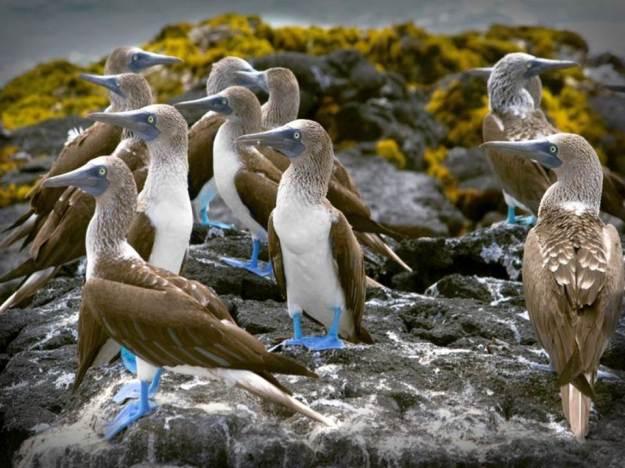 galapagos-island-45-photos- (14)