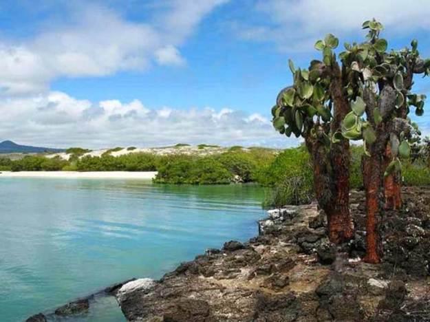 galapagos-island-45-photos- (19)