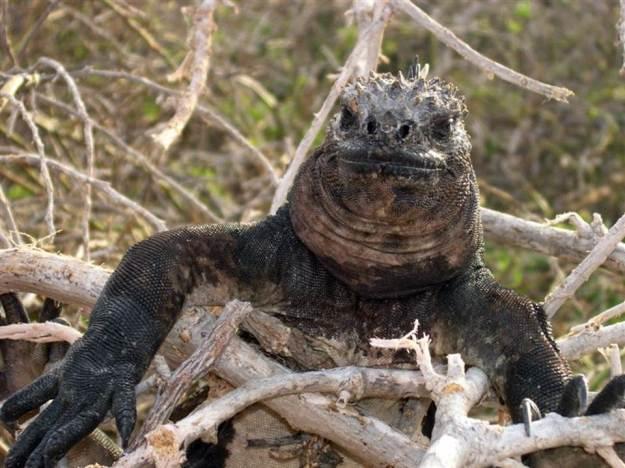 galapagos-island-45-photos- (25)