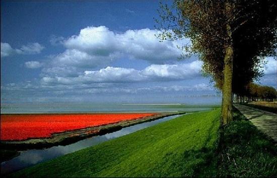 netherlands-tulips- (9)
