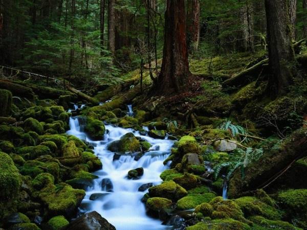 beautiful-nature-wallpapers-15-photos- (9)