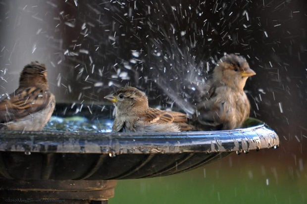birds-in-rain- (1)
