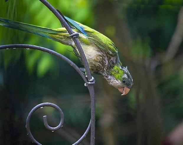 birds-in-rain- (16)