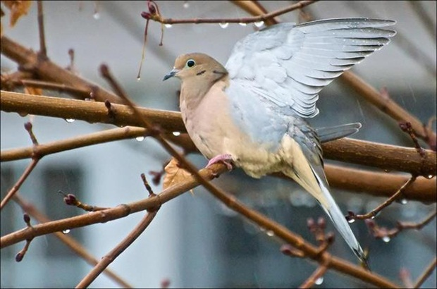 birds-in-rain- (19)
